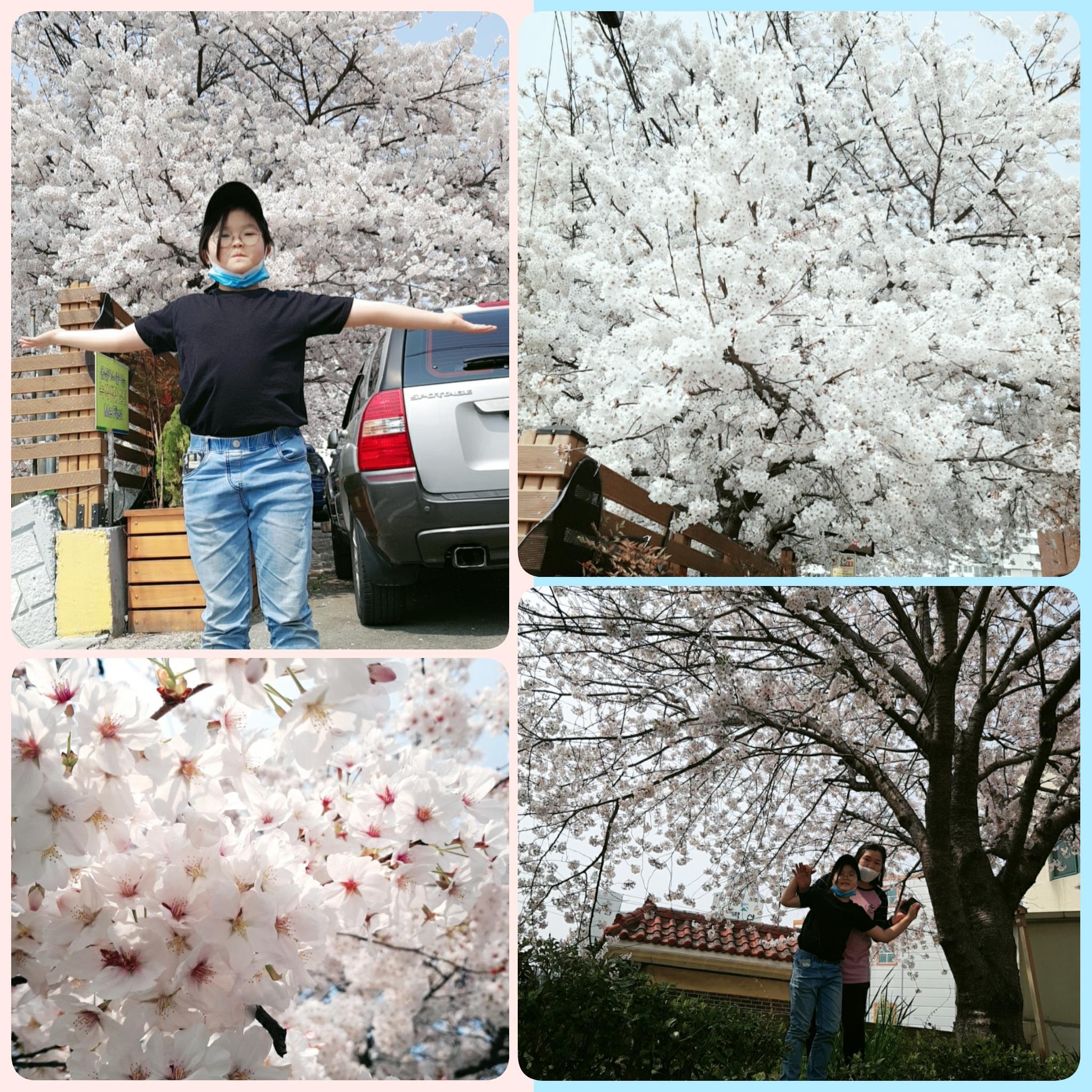 벚꽃이 예쁘다